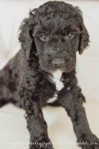puppies 6 weeks-13