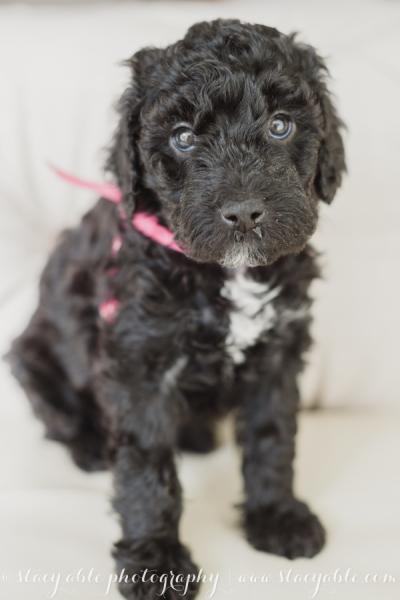 puppies 6 weeks-15