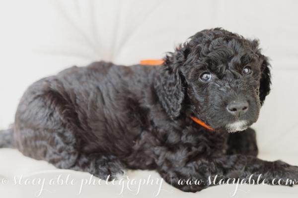puppies 6 weeks-19
