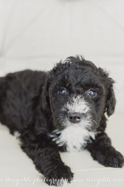 puppies 6 weeks-2