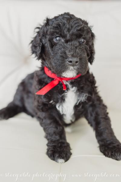 puppies 6 weeks-23