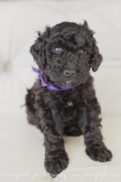 puppies 6 weeks-26