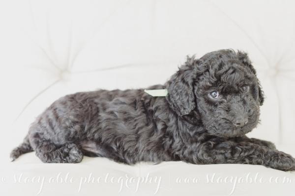 puppies 6 weeks-32