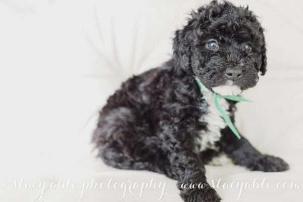 puppies 6 weeks-34