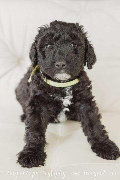 puppies 6 weeks-7