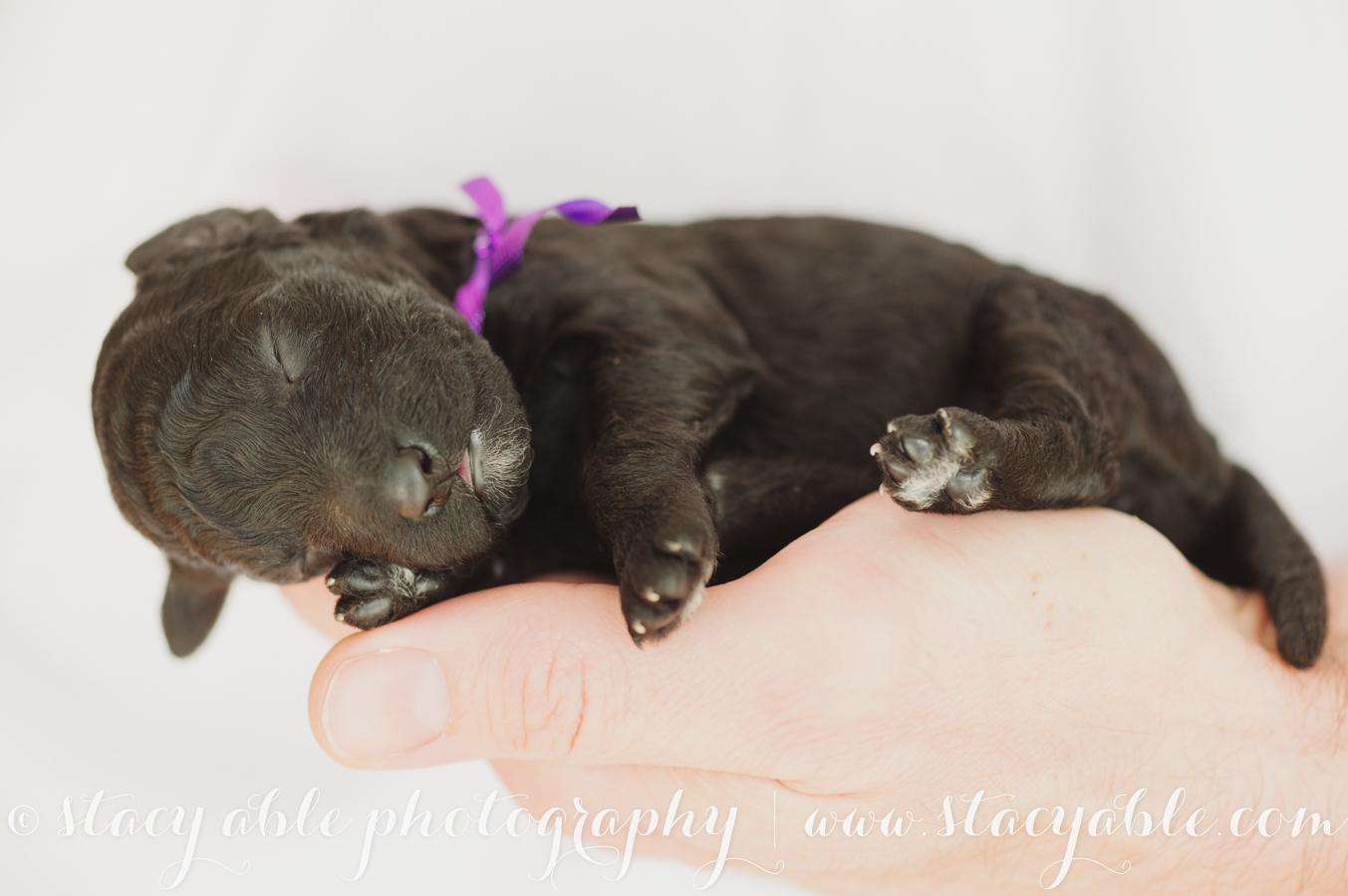 puppy-36
