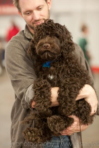Barbet Corbin at the Louisville kentucky dog show