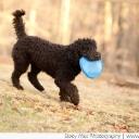 Dyna Barbet Dog Photo 3