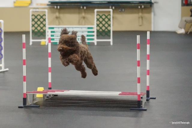 barbet eli agility2