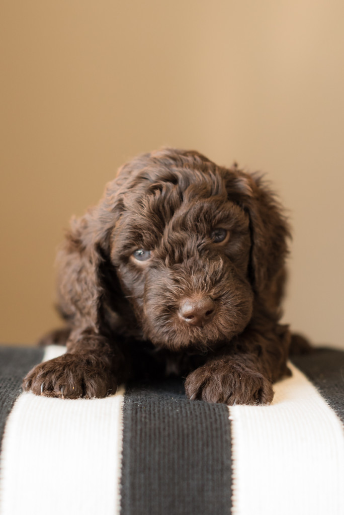 barebt puppy photo